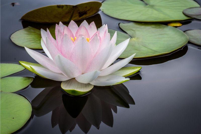 zevende chakra de duizendbladerige lotus